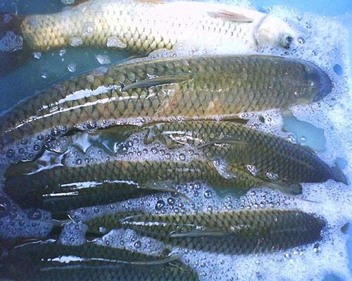 分析湖北鱼饲料检测成分