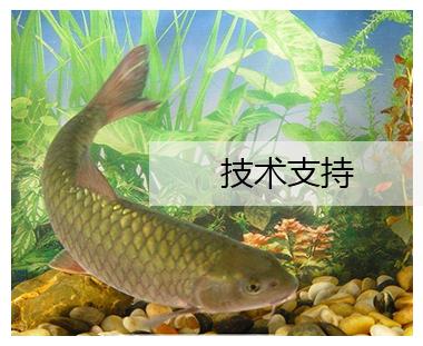 湖北鱼饲料厂家