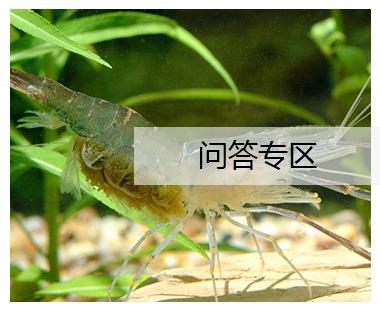 荆州鱼饲料厂家