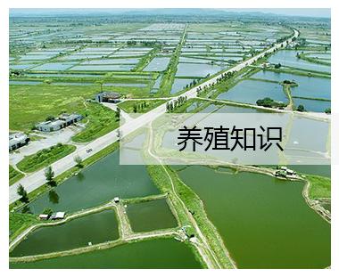 荆州虾饲料厂家